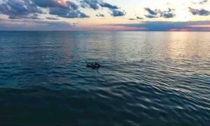 Τα πλασματάκια που έκαναν παιχνίδια στα νερά της Εύβοιας