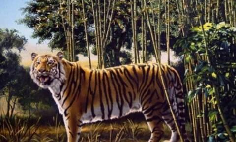 Μόνο το 5% των ανθρώπων μπορεί να δει την δεύτερη τίγρη! Εσείς; (pics)