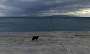 Απίστευτη ψαριά στο Ναύπλιο - Τι έβγαλαν από τη θάλασσα (pics)