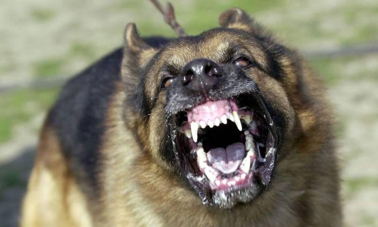 Τρόμος για ζευγάρι στον Πύργο: Τους δάγκωσαν οι ίδιοι οι σκύλοι τους
