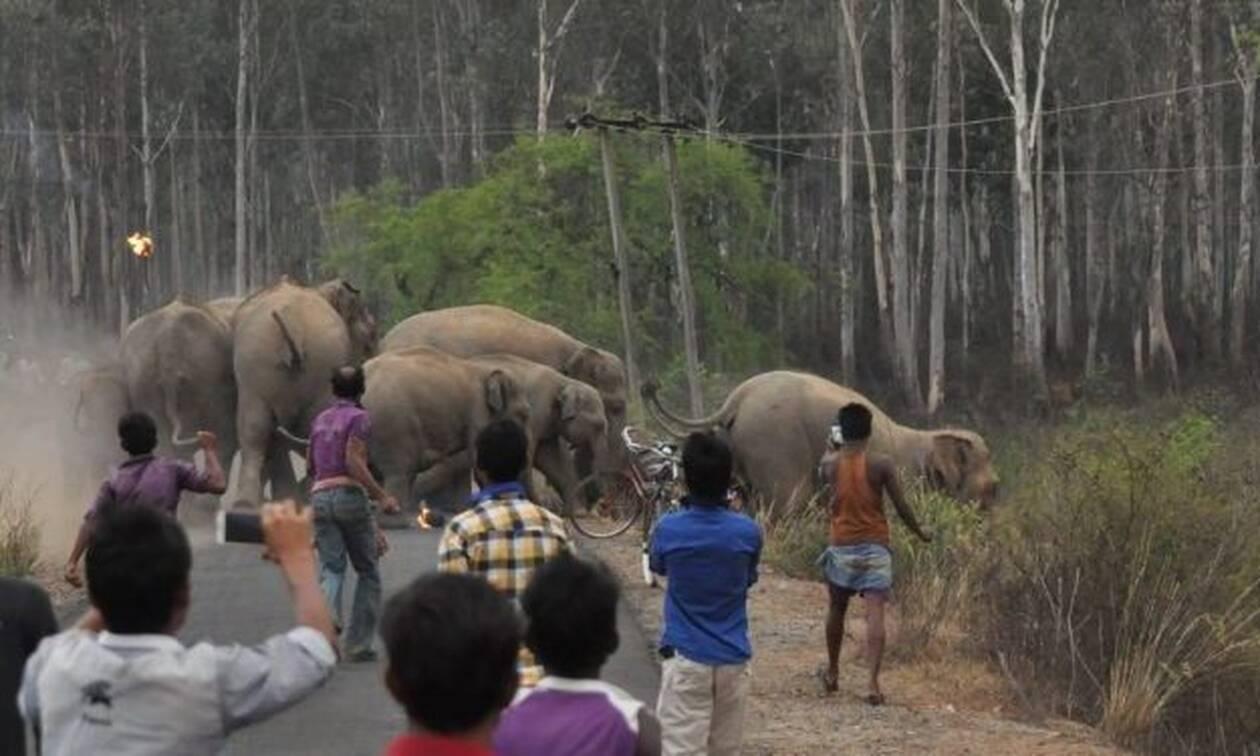 30 ελέφαντες κάνουν επίθεση σε άτυχη γυναίκα! (video)