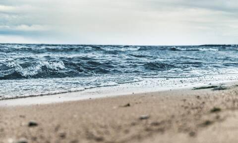 Τεράστιο πλάσμα ξεβράστηκε σε παραλία – Απίστευτες εικόνες