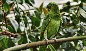 Αδιανόητο: Κοίταξε στο κλουβί του παπαγάλου της - Άρχισε να ουρλιάζει με αυτό που είδε...