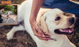 Πώς να σταματήσετε σε δευτερόλεπτα το γάβγισμα του σκύλου σας