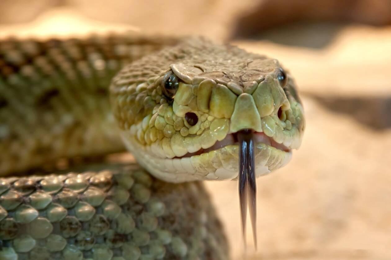 rattlesnake-653642_1280.jpg