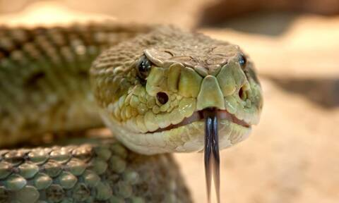 Τον δάγκωσε φίδι - Δείτε τι ανατριχιαστικό έκανε αμέσως μετά στη γυναίκα του