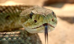 Τον δάγκωσε φίδι: Τι ανατριχιαστικό έκανε στη γυναίκα του αμέσως μετά (pics)