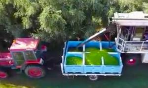 Τρελή πατέντα: Δείτε πόσο γρήγορα μαζεύουν τις ελιές! (vid)