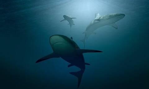 Σέρφερ κατέγραψε παραλία που κολυμπούσαν δεκάδες καρχαρίες - Συγκλονιστικό βίντεο