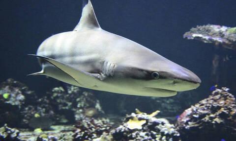 Συγκλονιστικό βίντεο – Σέρφερ κατέγραψε παραλία που κολυμπούσαν δεκάδες καρχαρίες