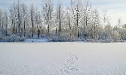 Απίστευτες εικόνες: Βρέθηκε νεκρό πουλί 46.000 ετών στη Σιβηρία
