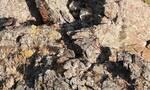 Τρομερό καμουφλάζ! Στη φωτογραγία υπάρχουν 4 λεοπαρδάλεις. Μπορείς να τις βρεις;