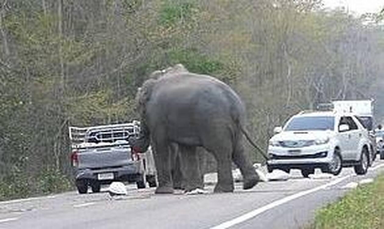 ΣΟΚ για οδηγό: Του όρμησαν ελέφαντες – Δείτε τι έκαναν στο αυτοκίνητό του (pics)