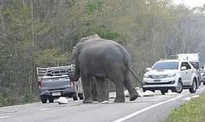 «Πάγωσε» οδηγός: Του όρμησαν ελέφαντες – Δεν θα πιστέψετε τι έκαναν στο αυτοκίνητό του (pics)