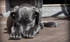 Συναγερμός: Σκύλος εντοπίστηκε με κοροναϊό - Τι φοβούνται οι επιστήμονες