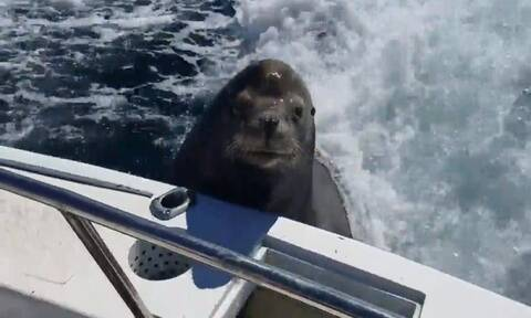 Απίστευτο! Θαλάσσιο λιοντάρι πήδηξε μέσα σε βάρκα με ψαράδες - «Πάγωσαν» μόλις είδαν τι ήθελε (vid)