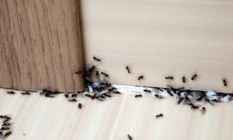 Έχετε μυρμήγκια στο σπίτι; Έτσι θα απαλλαγείτε μία και καλή