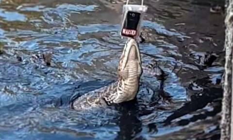 Βίντεο: Αλιγάτορας αρπάζει το τάμπλετ ενός… χαζούλη τουρίστα!