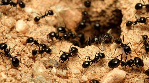 Πώς να εξαφανίσετε τα έντομα από το σπίτι