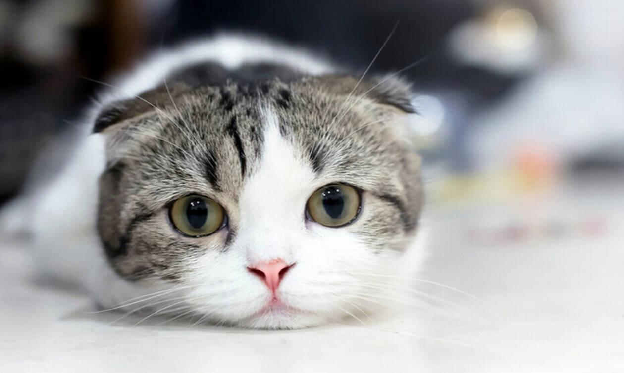Yπάρχει λόγος που γουργουρίζουν οι γάτες