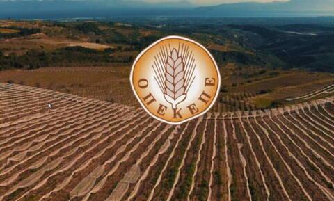 ΟΠΕΚΕΠΕ: Νέα πληρωμή σε δικαιούχους αγρότες σήμερα -  Αναλυτικά τα ποσά