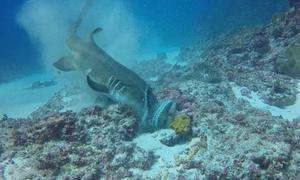 Καρχαρίας ΤΣΑΚΙΖΕΙ πελώριο χταπόδι σε χρόνο ντε τε! (vid)