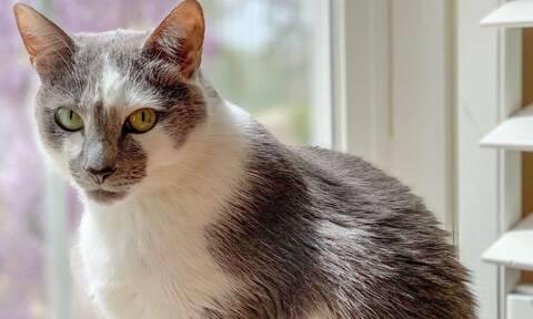 Κορονοϊός: Γάτος βρέθηκε θετικός σε κορονοϊό - Δείτε τι συνέβη