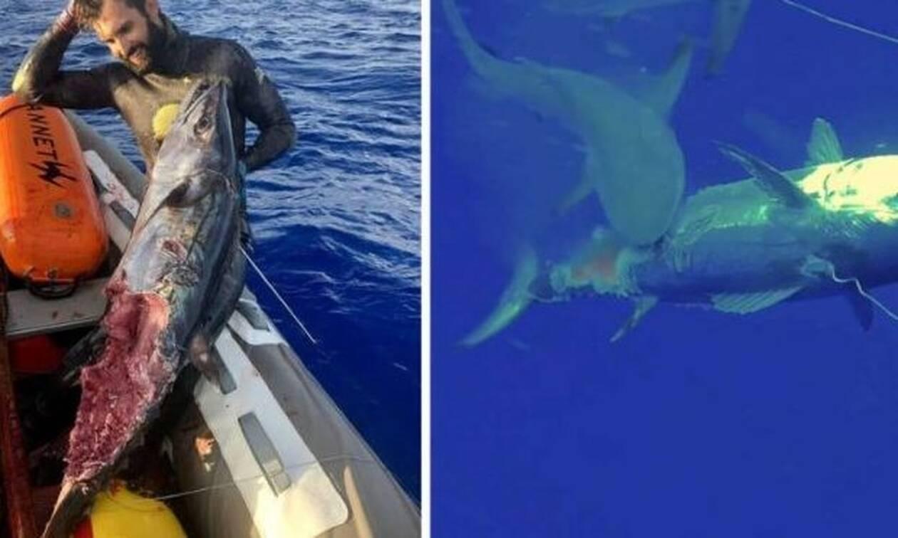 Ψαροντουφεκάς τα «βάζει» με 3 καρχαρίες!