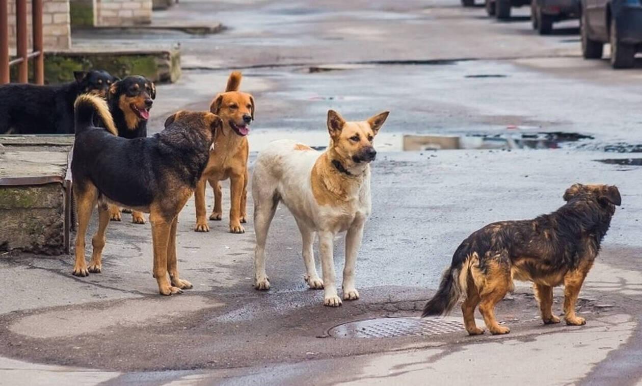 Τραγωδία στη Θεσσαλονίκη: Νεκρός άνδρας μετά από επίθεση αδέσποτων σκύλων