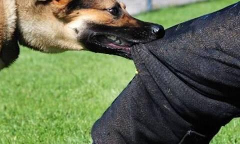 Θεσσαλονίκη: Στο νοσοκομείο 22χρονος από άγρια επίθεση σκύλων
