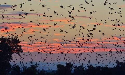 Συγκλονιστικό βίντεο: Χιλιάδες νυχτερίδες κρύβουν τον ήλιο!