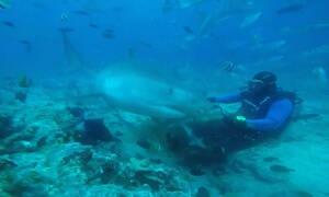 Εικόνες που κόβουν την ανάσα - Τεράστιος καρχαρίας δάγκωσε στο κεφάλι δύτη (vids)