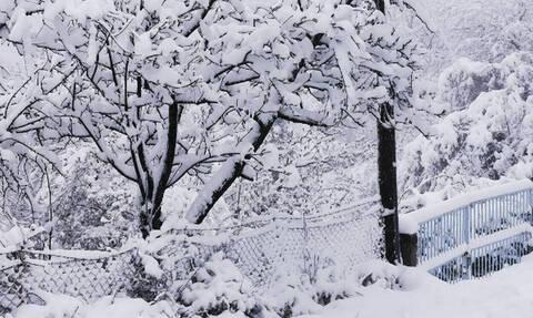 Καιρός: Στα λευκά η Βόρεια Ελλάδα - Κλειστοί δρόμοι και χωρίς ρεύμα πολλές περιοχές