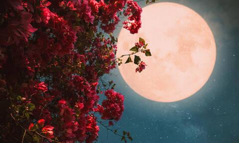 Ροζ Υπερπανσέληνος Απριλίου στον Ζυγό: Εντάσεις, καβγάδες και ρήξεις!
