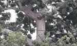 Κορονοϊός: Έσπασαν την καραντίνα για να προσευχηθούν σε ένα... δέντρο - Δείτε τι εμφανίστηκε