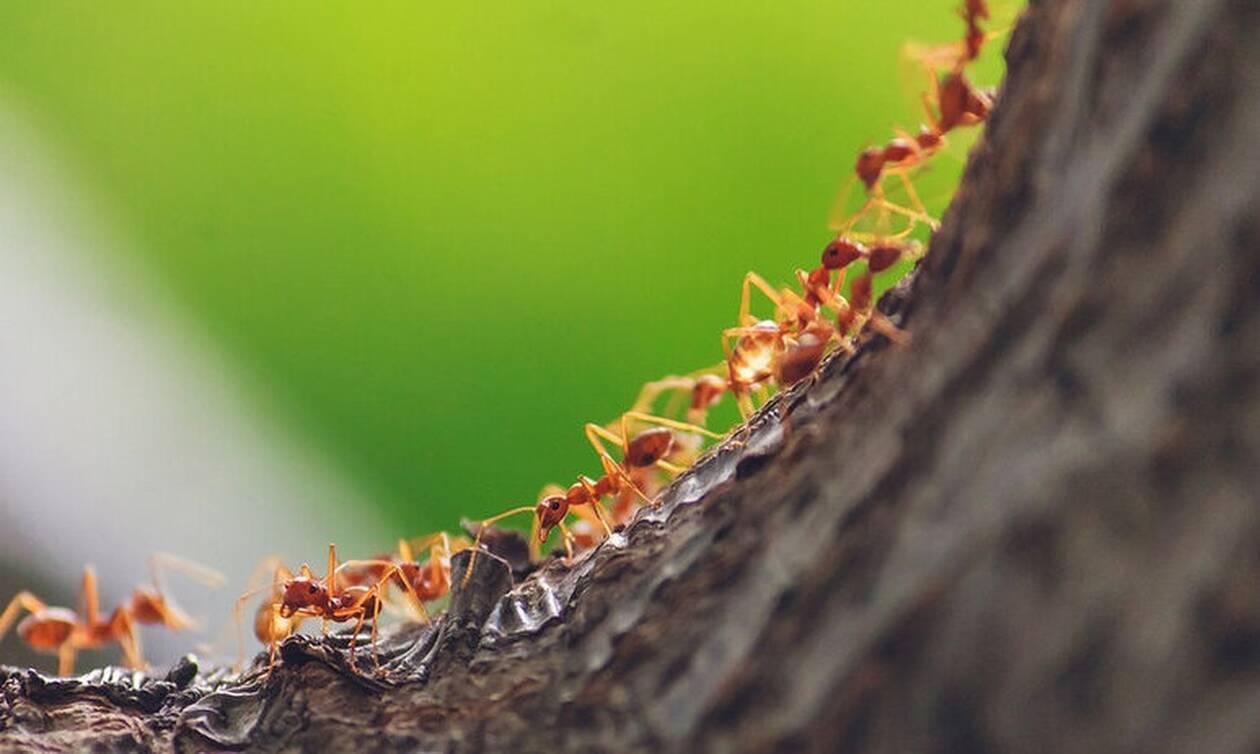 Σοκαριστικό video: Μυρμήγκια τα βάζουν με φίδι - Δεν φαντάζεστε την κατάληξη της μάχης