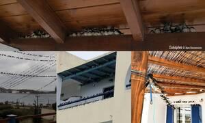 Αυτός είναι ο λόγος που γέμισε όλη η Ελλάδα νεκρά χελιδόνια - Σοκαριστικές εικόνες (pics)