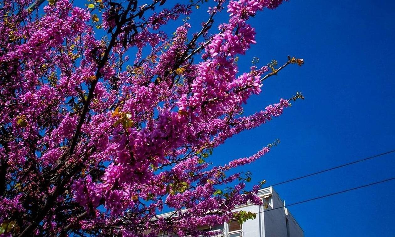 Καιρός Πάσχα 2020: Τι λέει ο Αρναούτογλου για τη Μεγάλη Εβδομάδα...