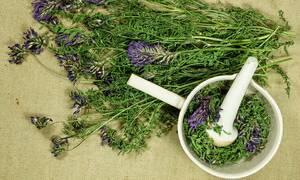 Κορονοϊός: Ποια είναι τα καλύτερα αντι-ιικά βότανα (εικόνες)