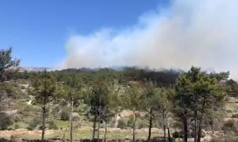 Χίος: Υπό μερικό έλεγχο η πυρκαγιά στην περιοχή Ανάβατου - Τραυματίστηκε ο πρόεδρος της κοινότητας