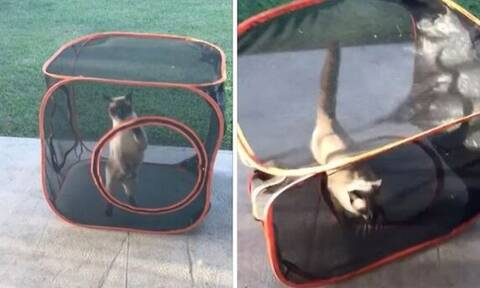 Γάτα παγιδεύεται και χάνει το μυαλό της! (vid)