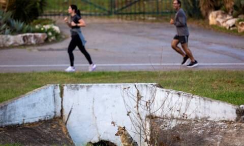 Απίστευτες εικόνες σε πάρκο εν μέσω κορονοϊού: Δείτε ποιοι... έκαναν κατάληψη;