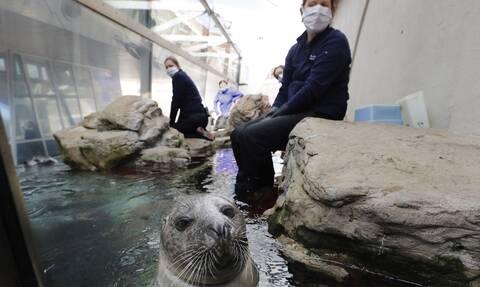 Κορονοϊός: Σχέδιο έκτακτης ανάγκης από ζωολογικό κήπο - Θανάτωση ζώων λόγω έλλειψης τροφής