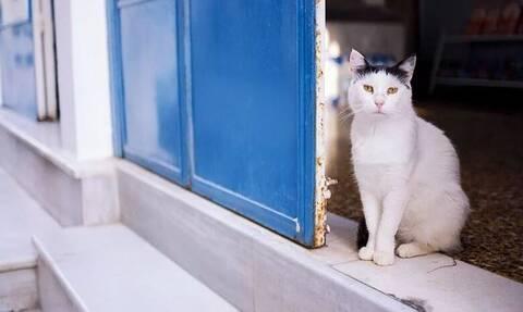Δείτε τι κάνει μία ναζιάρα γάτα από την Εύβοια