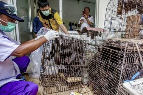 Ανακαλύφθηκαν έξι νέοι κορονοϊοί σε νυχτερίδες!