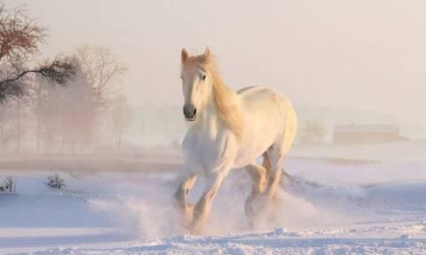 Πανέμορφες εικόνες! Άλογα καλπάζουν σε έρημο χιονοδρομικό κέντρο (vid)