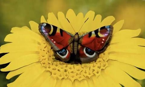 Η οφθαλμαπάτη που έγινε viral - Εσύ βλέπεις μόνο μία πεταλούδα σε λουλούδι; (video)