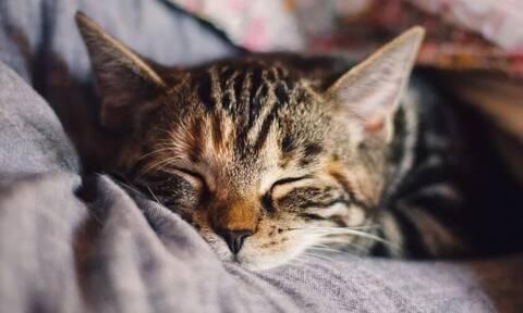 Νέα Υόρκη: Δύο γάτες βρέθηκαν θετικές στον κορονοϊό