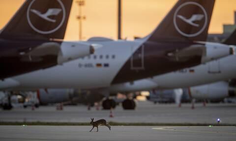 Κορονοϊός: Η αεροπορική εταιρεία Lufthansa υπό κατάρρευση - Αναμένει πακέτο στήριξης 10 δισ. ευρώ