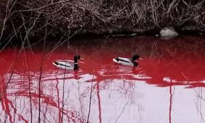 Ανατριχιαστικές εικόνες από «το ποτάμι του αίματος»